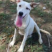 Adopt A Pet :: China - Great Falls, VA