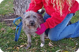 Terrier (Unknown Type, Small) Mix Dog for adoption in Elyria, Ohio - Sadie