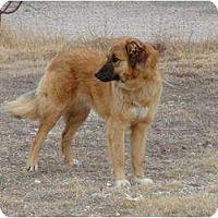 Adopt A Pet :: Hazel - Alliance, NE