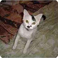 Adopt A Pet :: Smartie - Strathmore, AB