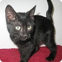 Adopt A Pet :: Starr - Shelton, WA