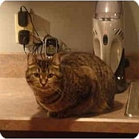 Adopt A Pet :: Marsha - Muncie, IN
