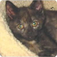 Adopt A Pet :: Flora - Syracuse, NY