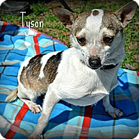 Adopt A Pet :: Tyson - Vancleave, MS