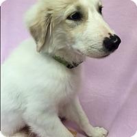 Adopt A Pet :: Jo Jo - South Dennis, MA