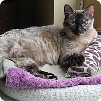 Adopt A Pet :: Galaxy - Prescott, AZ