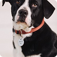 Adopt A Pet :: Moriarty - Portland, OR