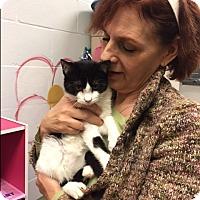 Adopt A Pet :: Callait - Manchester, CT