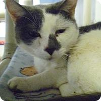 Adopt A Pet :: Spike - Hamburg, NY