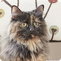Adopt A Pet :: Amber - Marietta, GA