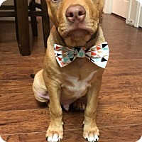Adopt A Pet :: Wade - Houston, TX