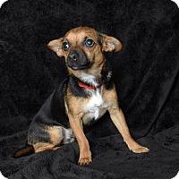 Adopt A Pet :: Wylie - Van Nuys, CA