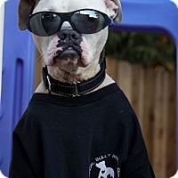 Adopt A Pet :: Levi - Lincoln, CA