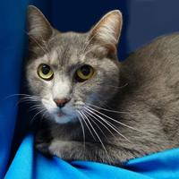 Adopt A Pet :: Ashes - Mentor, OH