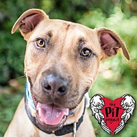 Adopt A Pet :: Jake - St. Petersburg, FL