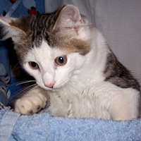 Adopt A Pet :: Austin - Metamora, IN