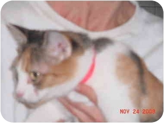 Calico Cat for adoption in Pendleton, Oregon - Cleopatra