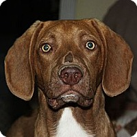 Adopt A Pet :: Flynn - PENDING, in Maine - kennebunkport, ME