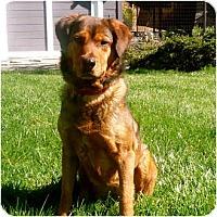 Adopt A Pet :: Ginger - Petaluma, CA