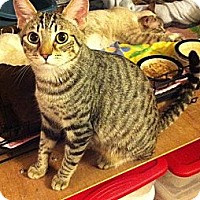 Adopt A Pet :: Blake - Long Beach, CA