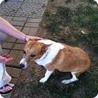 Adopt A Pet :: Mazy - Council Bluffs, IA