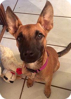 German Shepherd Dog Mix Puppy for adoption in CHICAGO, Illinois - MINKA