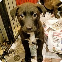 Adopt A Pet :: Ford*ADOPTED!* - Chicago, IL
