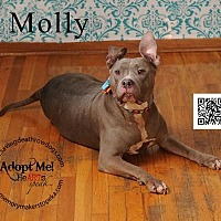 Adopt A Pet :: Molly - Topeka, KS