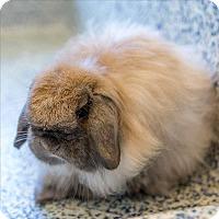 Adopt A Pet :: Jaquie - Golden, CO
