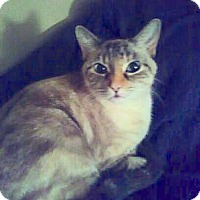 Adopt A Pet :: China - Fowlerville, MI