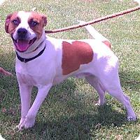 Adopt A Pet :: Toby - Metamora, IN