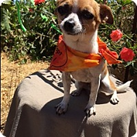 Adopt A Pet :: PAYLO - Elk Grove, CA