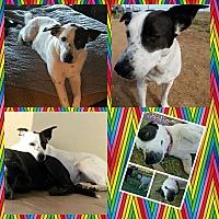Adopt A Pet :: Sadie - Snyder, TX