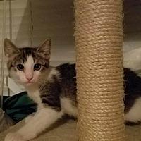Adopt A Pet :: Fletch - San Tan Valley, AZ