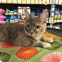 Adopt A Pet :: Sunshine - Barrington Hills, IL