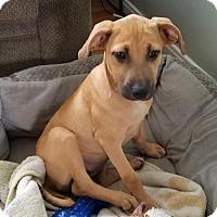 Adopt A Pet :: D25 Litter- Sansa  ADOPTED - Livonia, MI