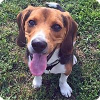 Adopt A Pet :: MALLARD - Boston, MA