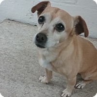 Adopt A Pet :: Finlay (COURTESY POST) - Baltimore, MD