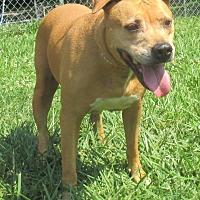 Adopt A Pet :: Pennie - Reeds Spring, MO