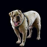 Adopt A Pet :: Roscoe - Odessa, FL