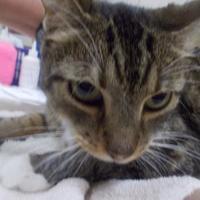 Adopt A Pet :: Tara Diddle - Palm Coast, FL