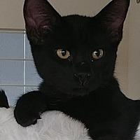 Adopt A Pet :: Percy - South Saint Paul, MN