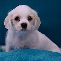 Adopt A Pet :: Luigi - Rancho Palos Verdes, CA