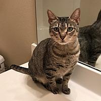 Adopt A Pet :: Zavalla - Houston, TX