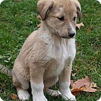 Adopt A Pet :: Baker <b>ADOPTED!!!</b> - Toronto/Etobicoke/GTA, ON