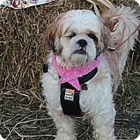 Adopt A Pet :: Opal - Wytheville, VA