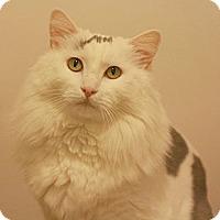 Adopt A Pet :: Shiva - Canoga Park, CA