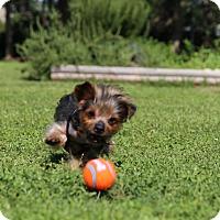 Adopt A Pet :: Marty - Conroe, TX