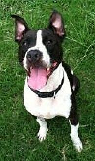 Terrier (Unknown Type, Medium) Mix Dog for adoption in Jackson, Mississippi - Simon