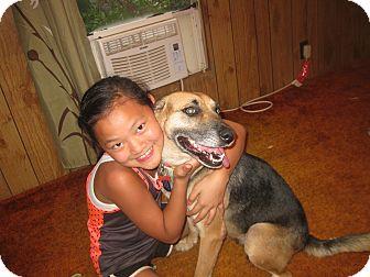 German Shepherd Dog Mix Dog for adoption in Portland, Maine - Delta (Cat Friendly)